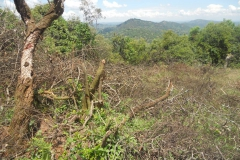 Remnant forestcutting is a threat to biodiversity.